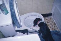 Dog&Toilet