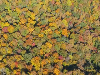 Autumn from the air